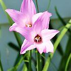 Flowers by Jeff Ore