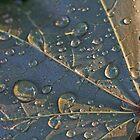 water droplet macros by Paul Kavsak