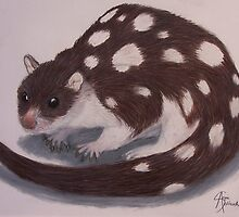 Spotted Quoll by angieschlauch