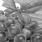 grapes by balom