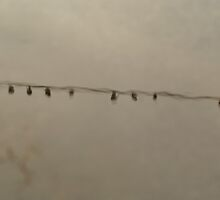 Birds on a Wire by papasan59