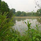 Pond by Blue Skye Art  & Photography