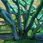 Abstracted Tree With Fauvist Colors #1 by Ivana Redwine