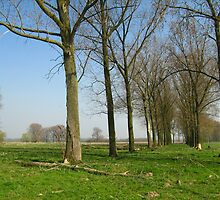 Two rows of trees in a green field by Ireentje