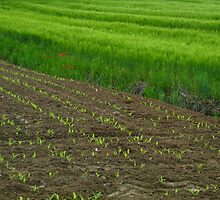 plants next to wheat field by Ireentje