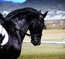 Friesian Beauty by Vanessa  MacLeod