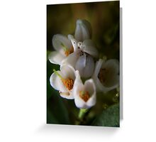 blossoms of Cowberry (from wild flowers collection) Greeting Card