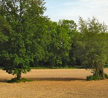 two trees on bare field by Ireentje