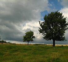 Big and little tree in field by Ireentje