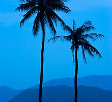 Palms in Blue by Kerry Dunstone