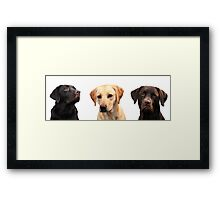 Three muskateers Framed Print