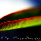 Leaf Edge by RajeevKashyap
