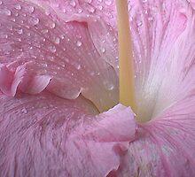 Natural Beauty by CarolM