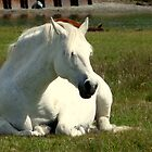 White Unicorn Sunbathing by HELUA