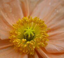 Peachy Petals by Deborah  Benoit