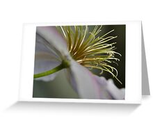 Summer Flower II Greeting Card