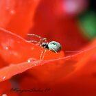 ITSY BITSY SPIDER by Katagram
