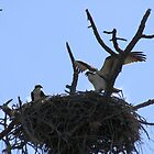 I Rule this Roost!! by Donna Adamski