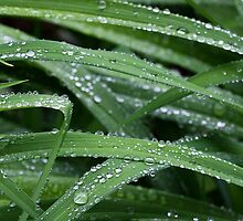 Green With Rain Drops by Deborah  Benoit