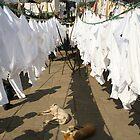 Drying up by Xavier Sieckmeijer