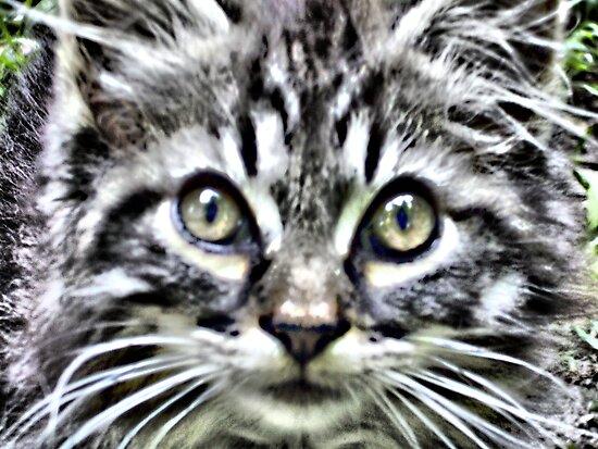 Lee's Kitten by suzannem73