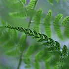 ferns by Paul Kavsak