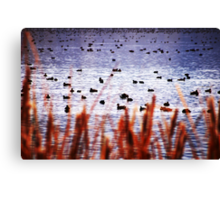 WATERFOWL REFUGE Canvas Print