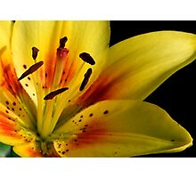 Lilies of the Yard 2 Photographic Print