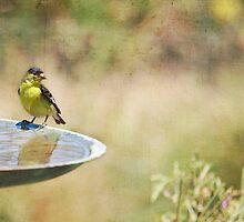 A Yellow Bird on a Fountain by Susan Gary