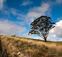 Lone Tree Landscape by Carol Ritchie