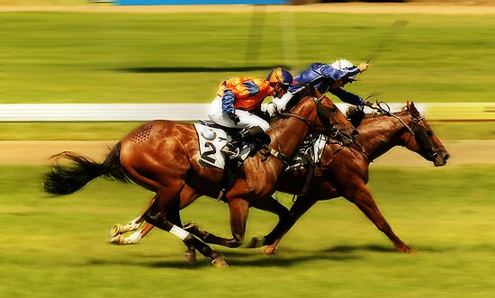 :: Adelaide Cup:: by aftan