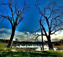 Guardians #2 - Wonga Wetlands - The HDR Experience by Philip Johnson