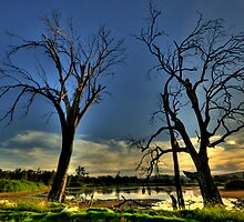 Guardians - Wonga Wetlands, Albury, NSW - The HDR Experience by Philip Johnson