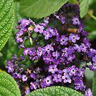 Purple Flowers by onesnap