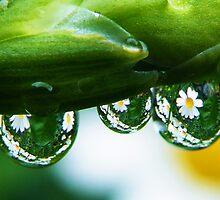 It is raining daisy's by Yool