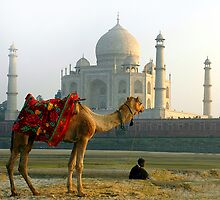 Taj Mahal-View from Yamuna River End by Mukesh Srivastava