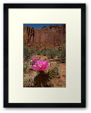 Pink Cactus Flower by Brian Hendricks