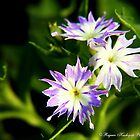 Purple With Green.jpg by RajeevKashyap