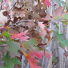 Strange Leaves - Night Fall, Celery Farm Marsh by Jim Legge