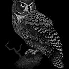 Great Horned Owl by SigneNordin