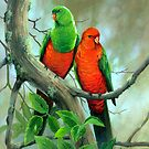 Australian King Parrots by eric shepherd