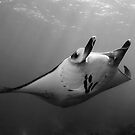 Manta Pose B&amp;W by MattTworkowski