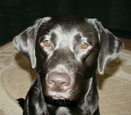 Brady Lyn, our Black Beauty! by tawaslake