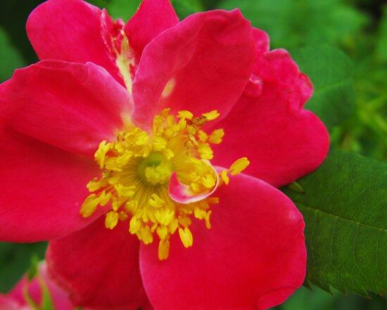 OOooooo....Pink!  by Nicole DeFord