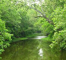 Big Darby Creek by CynLynn