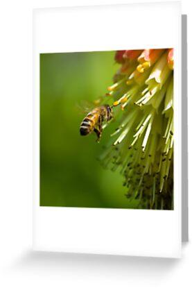 Bee in Flight  by Nigel Bangert
