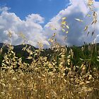 weeds by Jimmy Joe