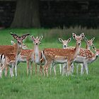 Multi-Headed Deer Herd! by dougie1