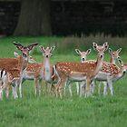 Multi-Headed Deer Herd! by dougie1
