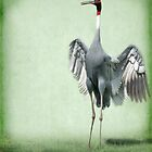 Sarus Crane by Kimberly Palmer